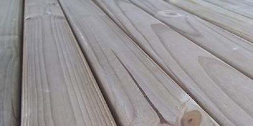Pinus-Tratado-–-foto-12